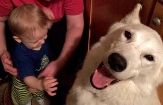 Parent-child help w/pets